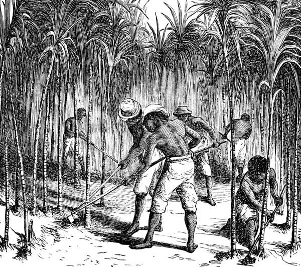 Tending Sugar Cane