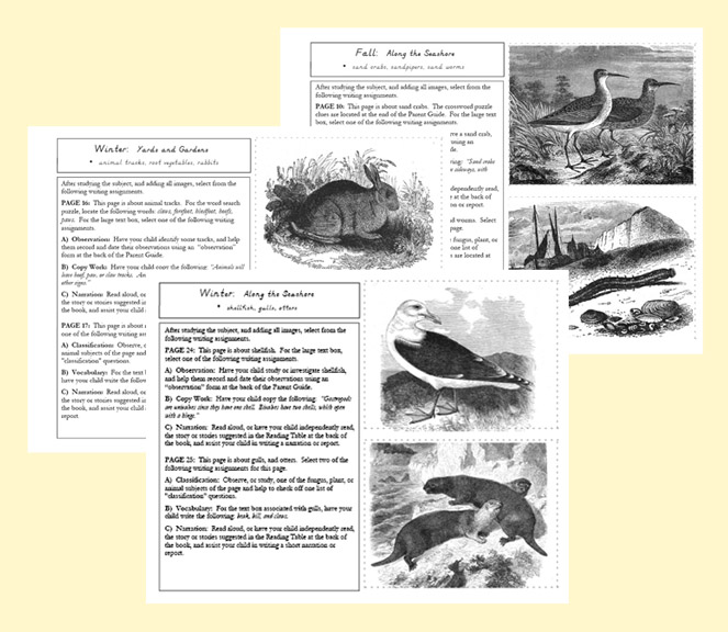 Examples of Nature Portfolio Teacher's Guide pages.